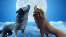 Zakochany wilczek